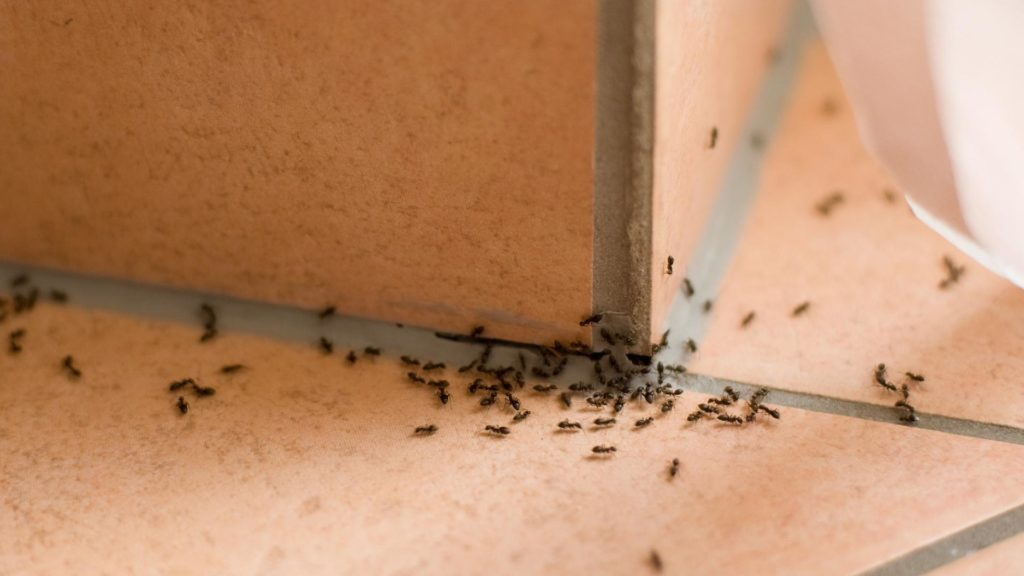 Easy trick how to get rid of ants in the home (photo)